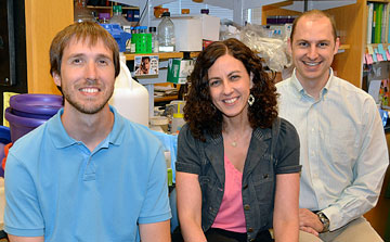 Postdoctoral fellow Jeremy Purvis (left) and graduate student Kyle Karhohs (right) worked with Galit Lahav, associate professor of systems biology at HMS, to investigate how P53 pulses control cell fate. Photo by R. Alan Leo