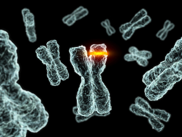 3D computer generated image of chromosomes. Image: cdascher/iStock