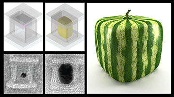The concept of casting nanoparticles inside DNA molds is similar to the Japanese method of growing watermelons inside cube-shaped glass boxes. Image: Peng Yin/Wyss Institute