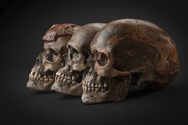 These three 35,000-year-old skulls from the Czech Republic were included in the study. Image copyright Martin Frouz and Jiří Svoboda