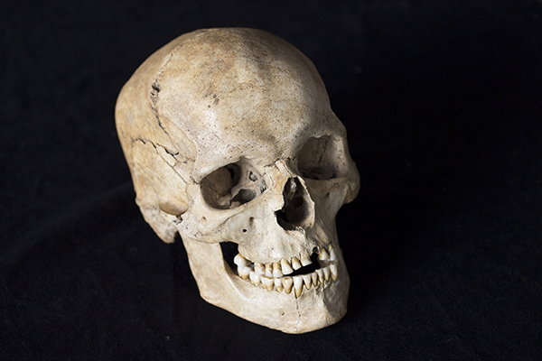 This skull came from an individual who lived in northeastern Italy around 14,000 years ago during the first big heat wave at the end of the ice age, when the genomes of Europeans and Near Easterners began to draw closer together. Image: Matteo Romandini, copyright University of Ferrara and Italian Ministry of Culture