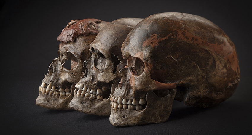 Three brown skulls against a dark background