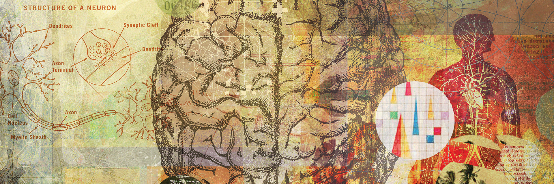 section of illustration showing brain