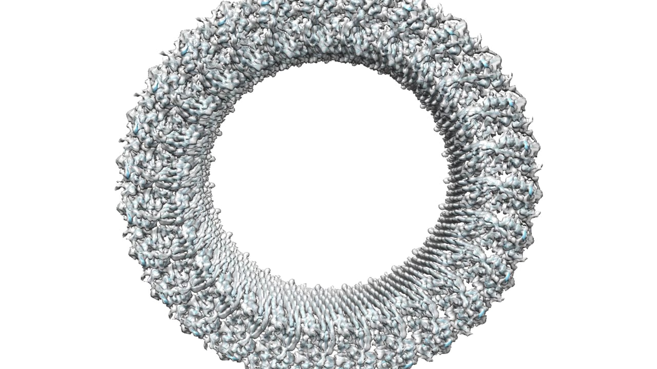illustration in grayscale of a ring with 27 identical, vertebrae-like pieces