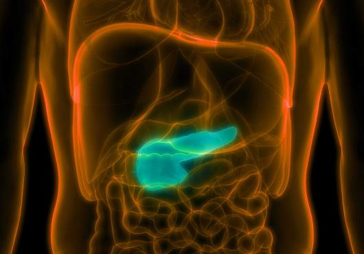 Artist's depiction of a pancreas inside a body