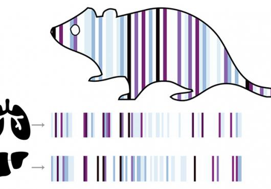 Illustration of a mouse, lungs and liver with barcode decorations