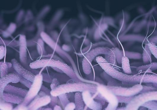 Photo illustration of flagellate cholera bacteria