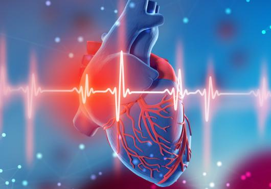 illustration of human heart with EEG readout