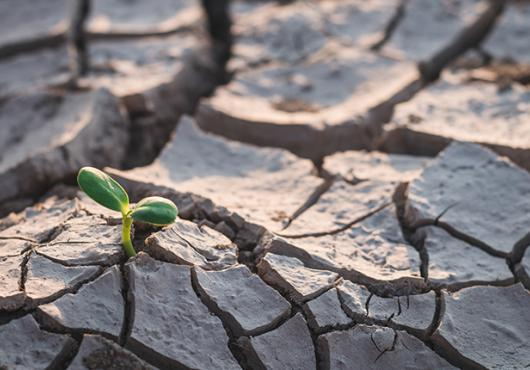 A small green shoot appears amid drought-cracked earth
