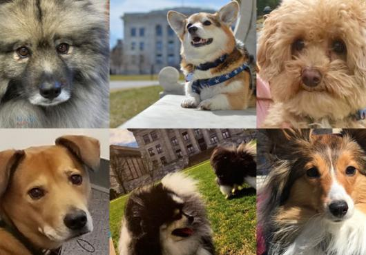 The dogs of HMS