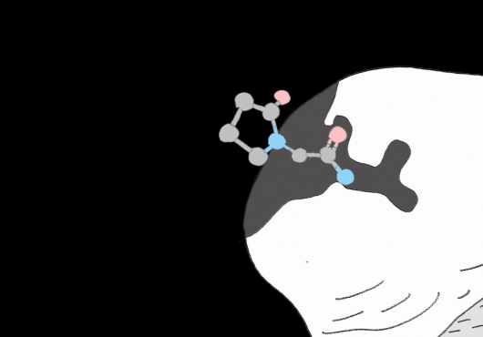 Animation shows a chemical compound binding to a protein like a puzzle piece