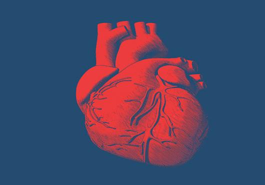 Heart Atlas | Harvard Medical School