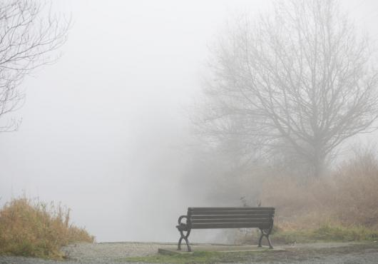 Empty bench in foggy park