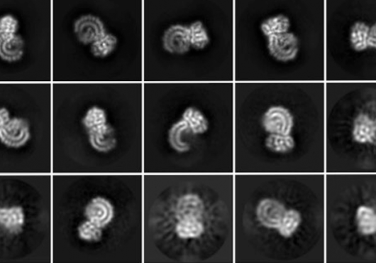 18 square microscopy images of curly protein in different orientations