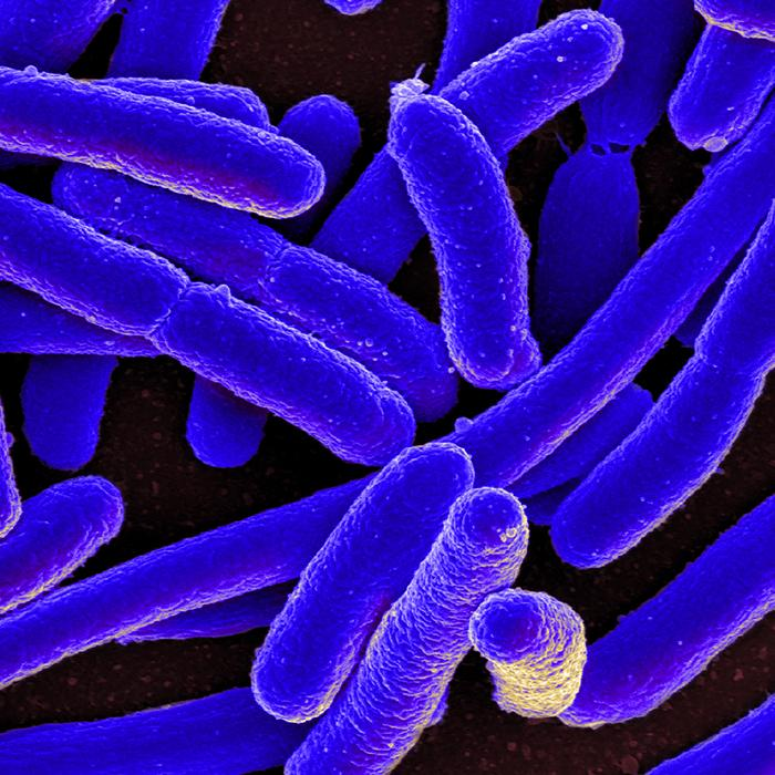 Change to a single gene in gut bacterium can alter metabolism