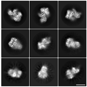 Six squares show microscopy of B-Raf from different angles