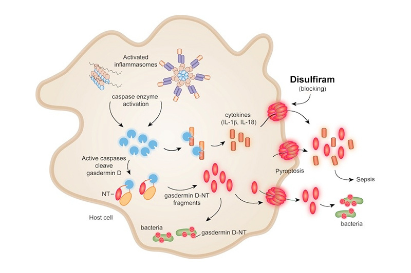 Diagram of cell with key proteins in the inflammatory process